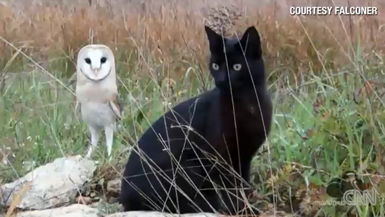 catowl.png