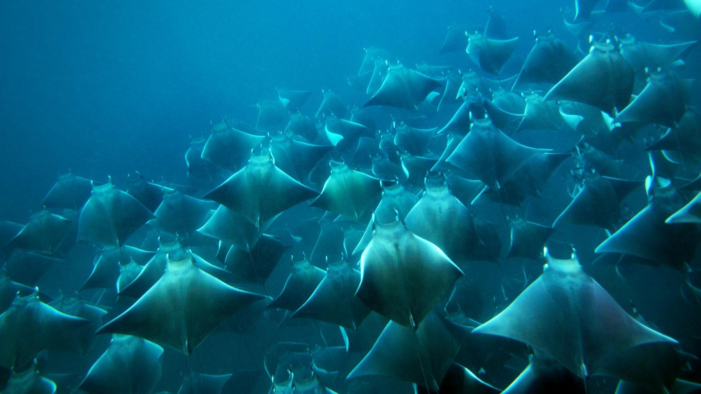 Attached Image: rays.jpg