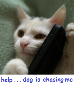 Cat on Phone.png
