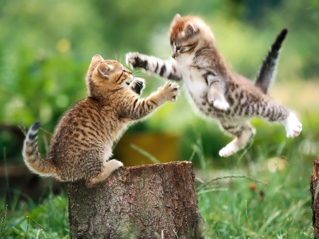 kittysfight.jpg