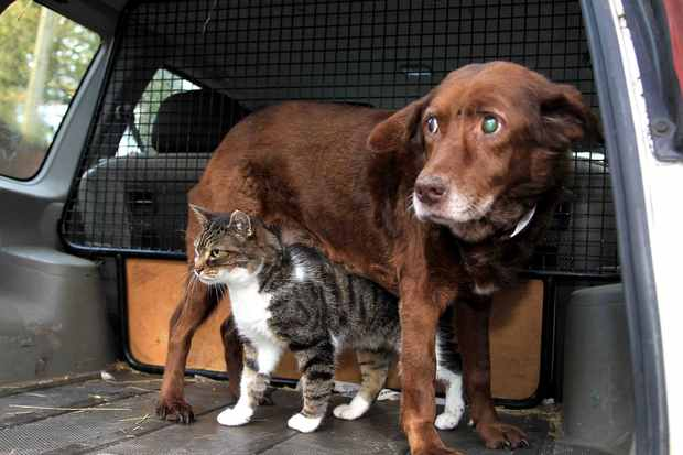 Attached Image: catdog.jpg