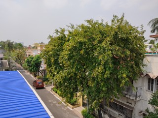 1585415753_redmi-tree.jpg