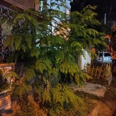 1601788091_poco-tree3.jpg