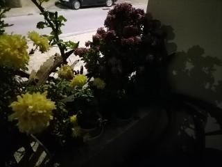 1606859165_night_4_1.jpg