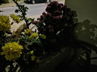 1606859172_night_4_2.jpg