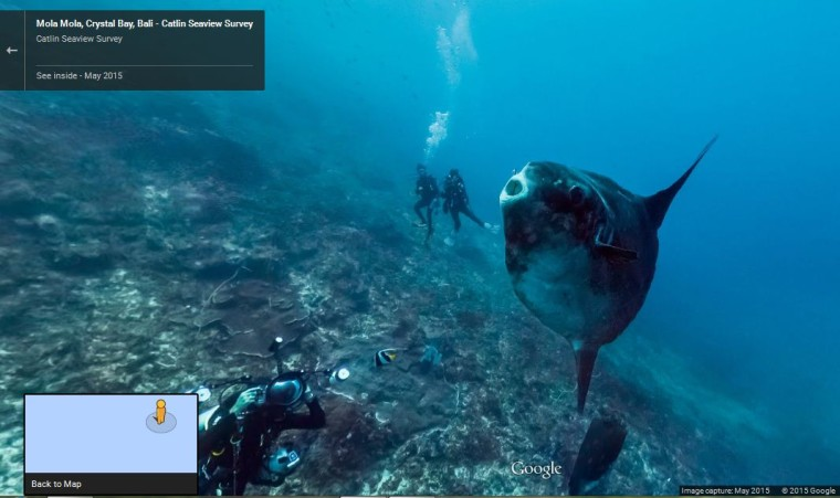 Google street view goes underwater lets you explore the oceans neowin gumiabroncs Image collections