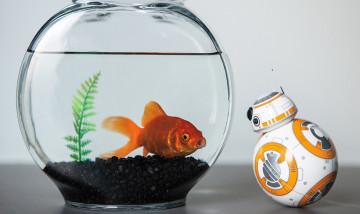 bb8-fish