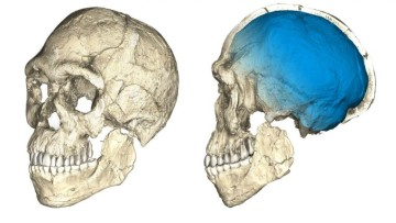 1497203782_composite_reconstruction_of_the_homo_sapiens_fossils_from_jebel_irhoud,_morocco