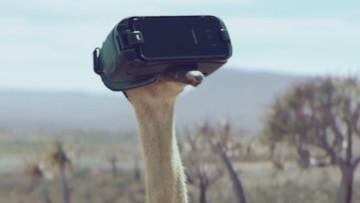 1498585523_samsung-ostrich