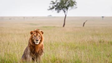 1565167363_lion
