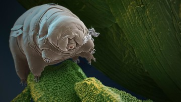 1565806574_tardigrades