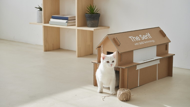 Cat in front of reused packaging cat house