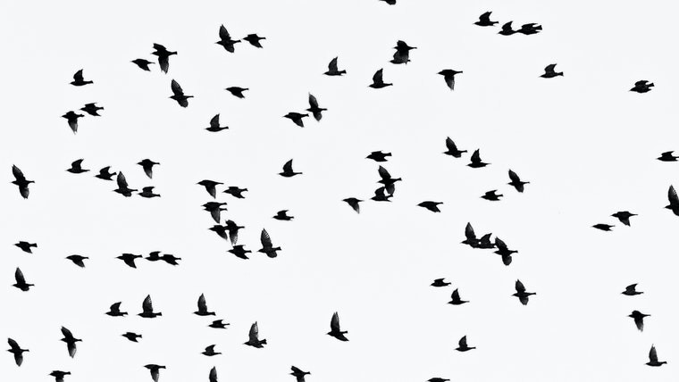A flock of birds