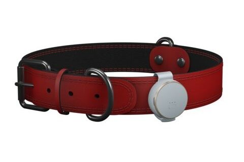 The Curve and pet collar clip