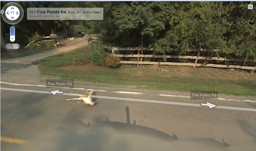 Google maps car hits a deer, records it all. Oh deer - Neowin on